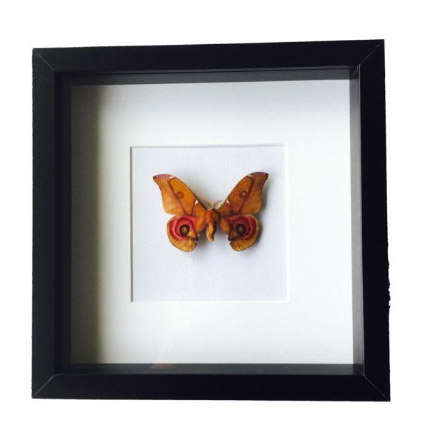 Vlinder Suraka Decoratie object