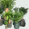 Plant Basket Jute Groen set
