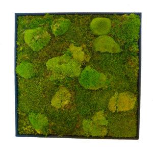 Mos Wandpaneel - groen
